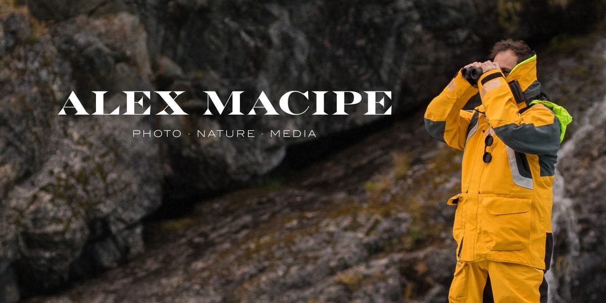 Alex Macipe