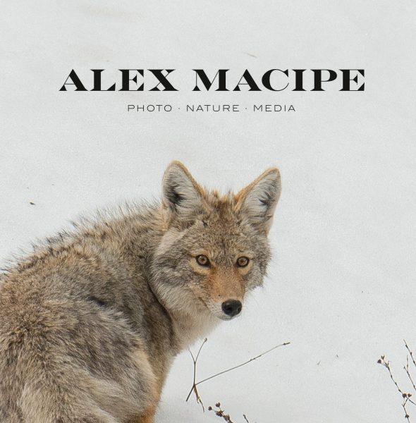 Alex Macipe Caliptra